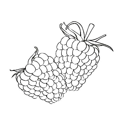 Free Raspberry Coloring Pages Pictures | Learn To Coloring