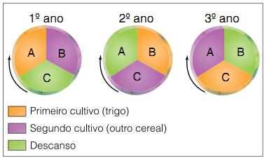 Resultado de imagem para ROTACAO TRIENAL DE CULTURas