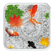 Koi Fish Live Wallpaper v1.1 APK Latest Free Download For Android