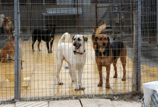 Χρηματοδότηση Δήμων για καταφύγια αδέσποτων ζώων