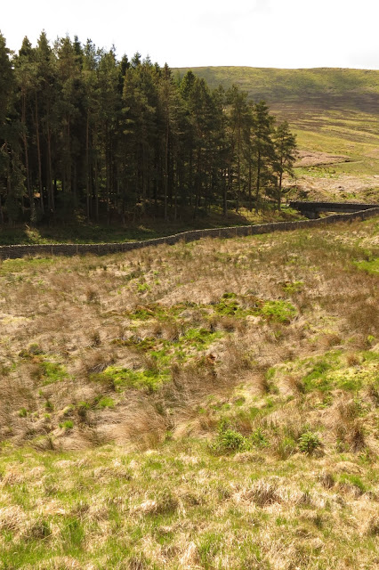 Moorland and a tree plantation in the background. Vivid green grass and moss in the foreground marks out a bog.