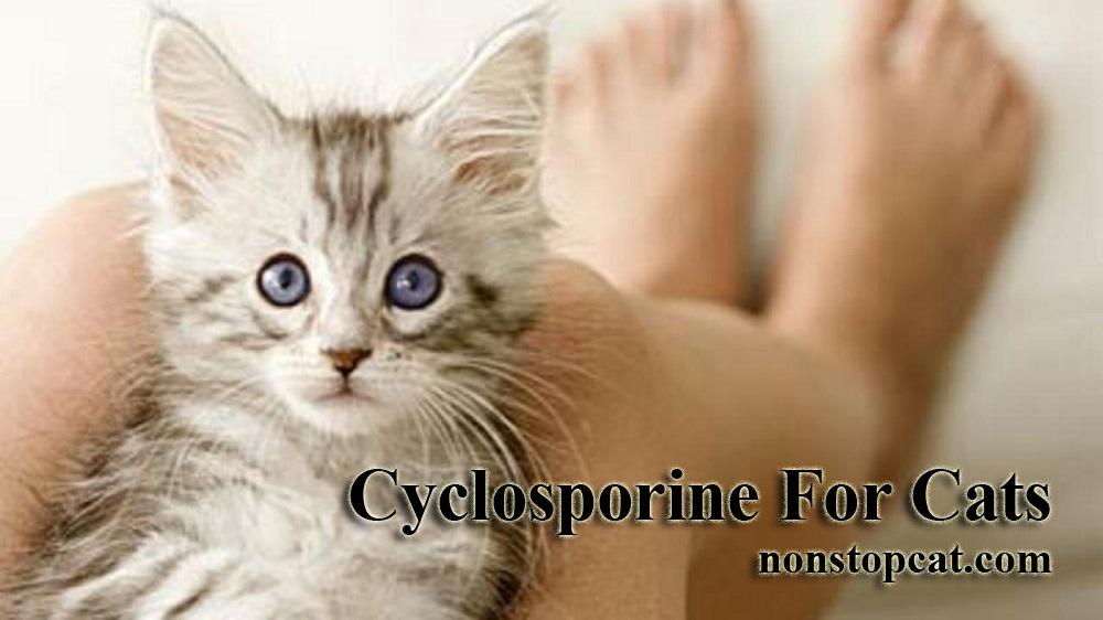 Cyclosporine For Cats