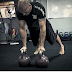 Why Kettle-bell Exercises are so much Popular? -STRENGTH TRAININGZ