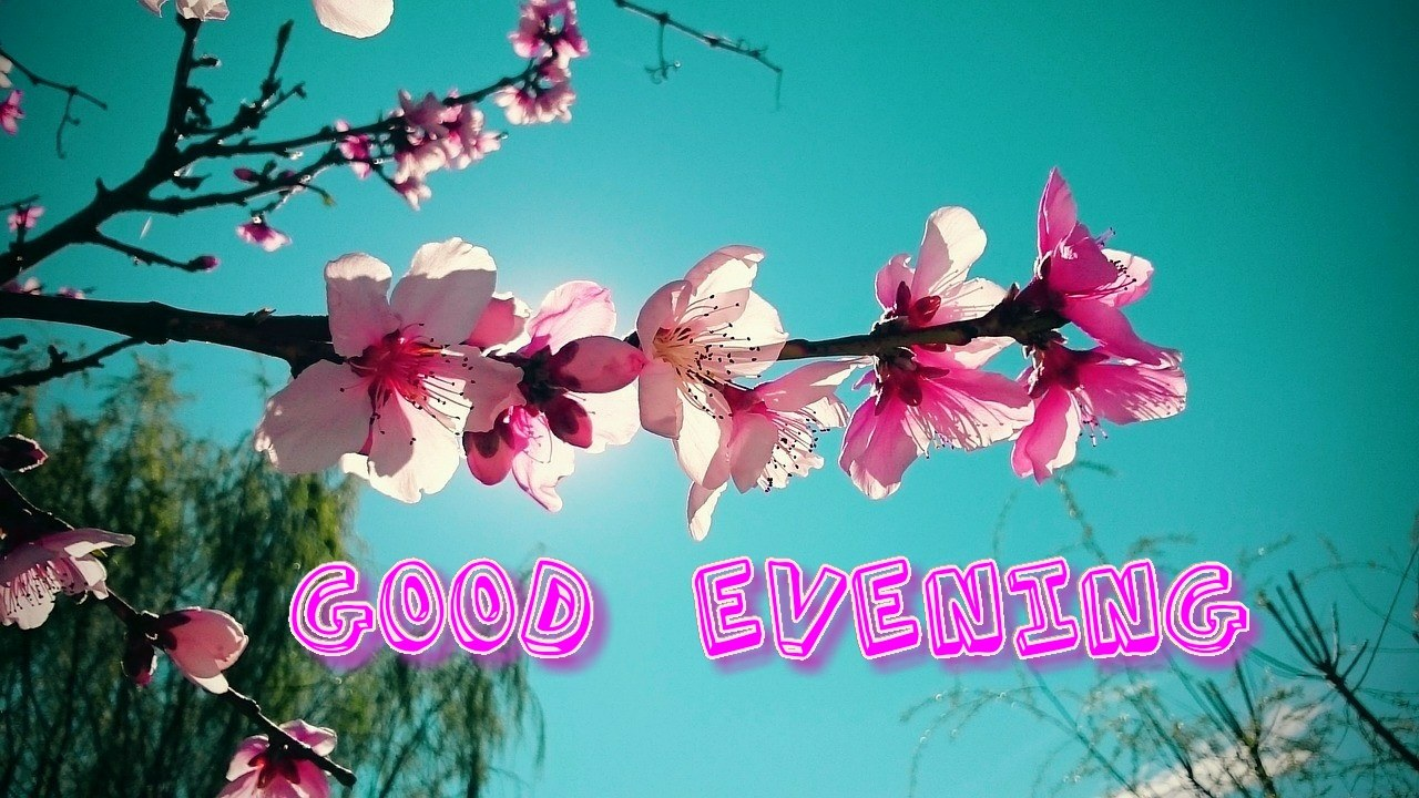 beautiful winters pink flowers with open sky & good evening image