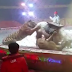 Watch Video: A lion & a tiger violently attack a horse at a circus in China