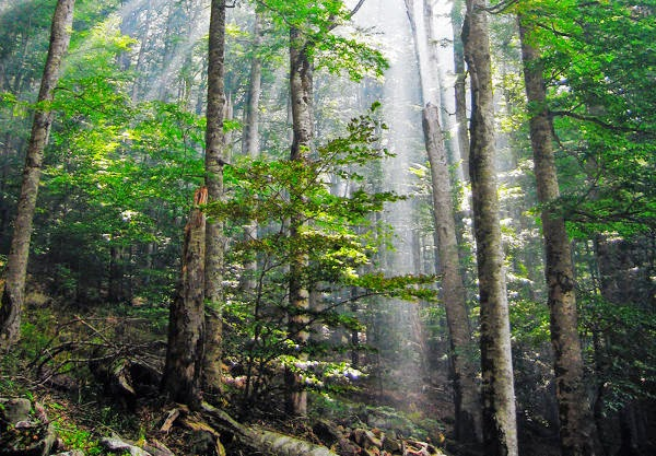 hutan hujan, curah hujan indonesia
