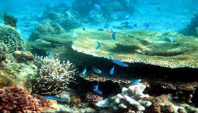 Snorkeling Pantai Tanjung Pasir