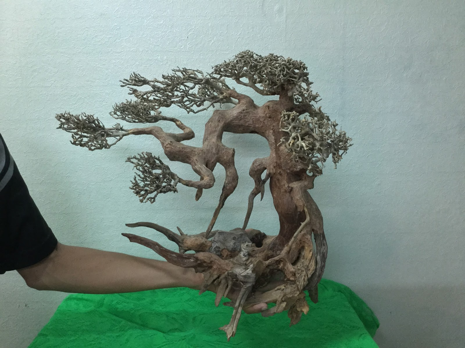 Lũa xương thường được dùng để ghép cây bon sai cho hồ thủy sinh