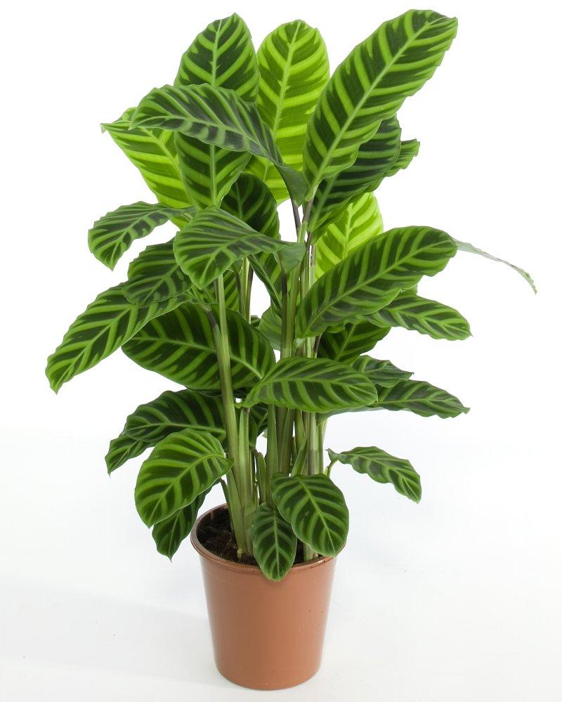de las plantas terrestres absorbe el agua por las raíces a través de