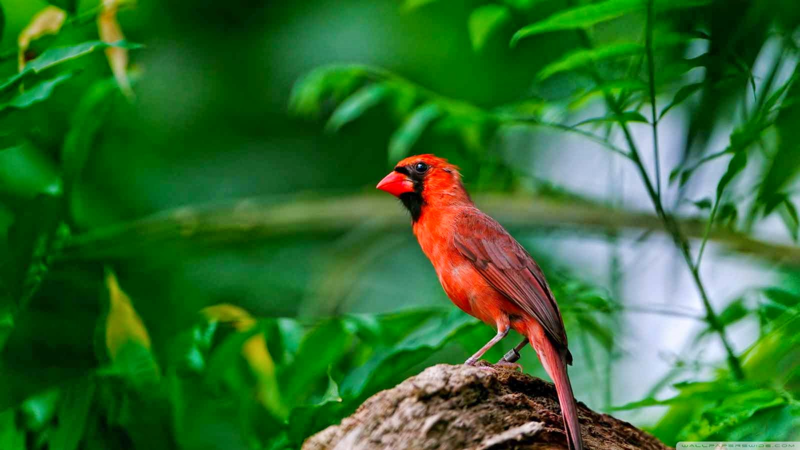 40 free beautiful birds wallpapers hd tinydesignr - Animal and bird hd wallpaper ...
