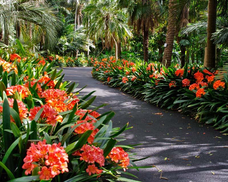 Lan Quân Tử là loài hoa khá phổ biến tại Việt Nam