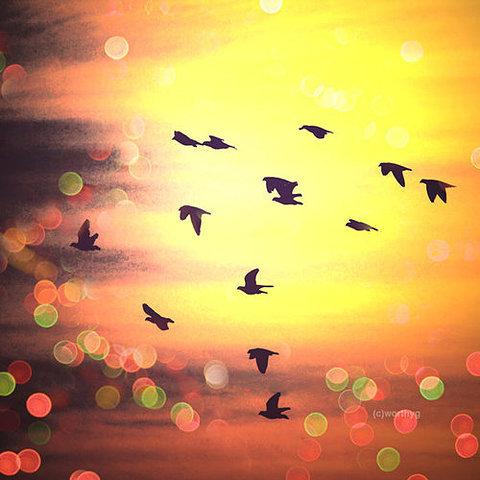 Imagens Tumblr Pássaros