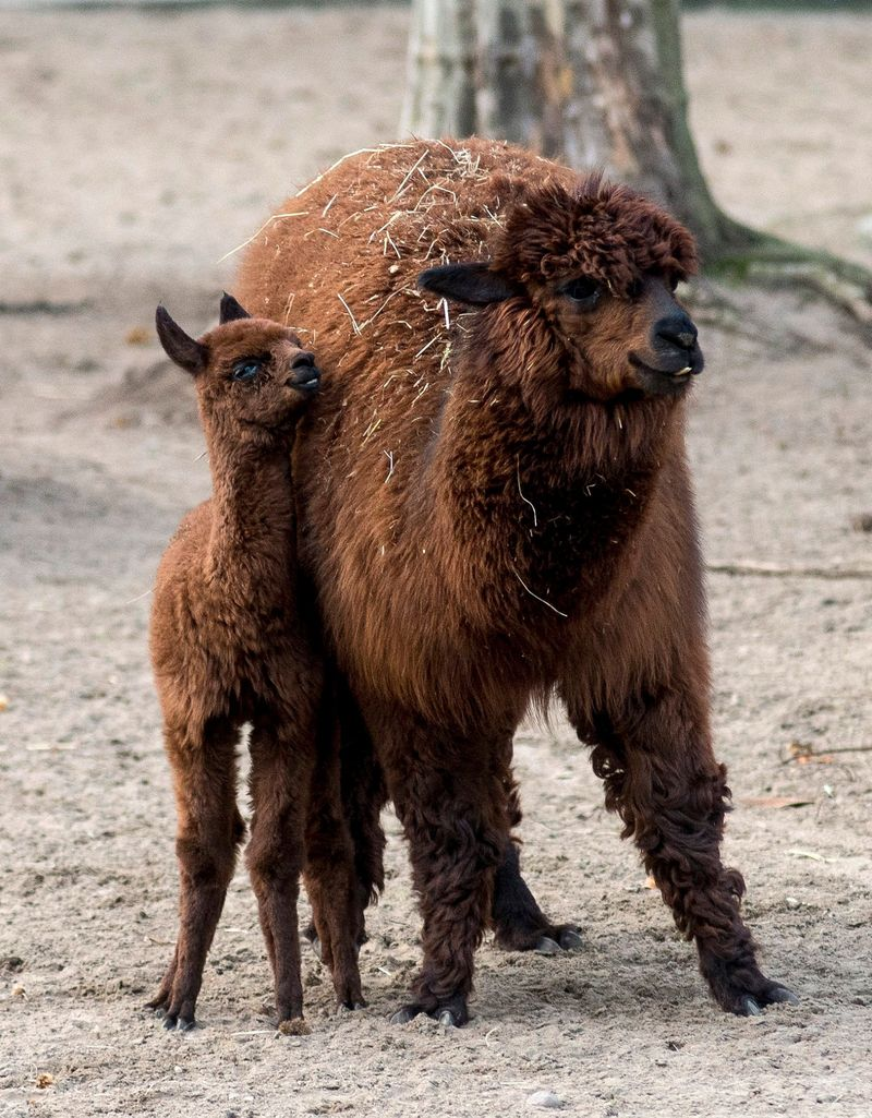 Baby Animals: Cria 5