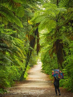 New Zealand, NZ, Rotorua, Redwoods, Whakarewarewa, Forest, Lady's Mile