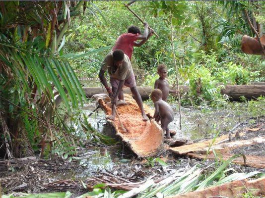 85 Persen Hutan Sagu Indonesia di Tanah Papua