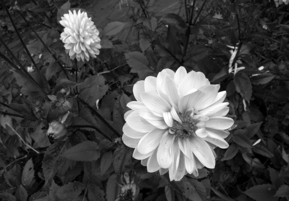Fotografía Creativa Artística En Blanco Y Negro Por