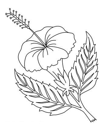 Tranh tô màu bông hoa dâm bụt