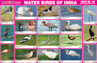 Water Birds of India Chart