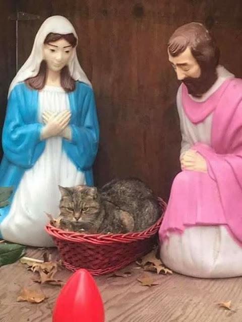 navidad con gatos, ya sabes lo que te espera