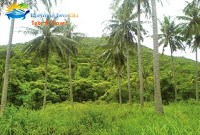 hutan legon lele karimunjawa