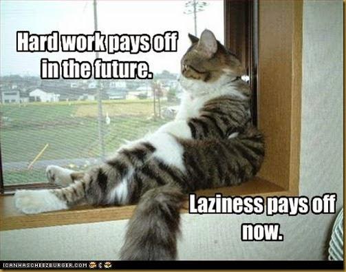 kucing nglamun