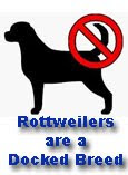 Rottweilers Are A Docked Breed on Facebook