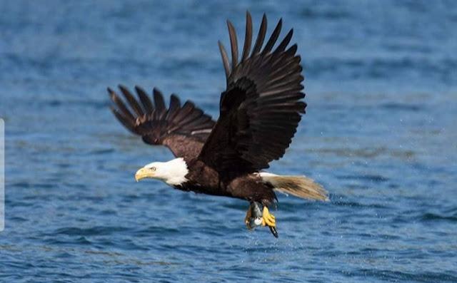 cara mengatasi berdiri didalam masalah, tips menjadi orang kuat. cara menangkap burung rajawali