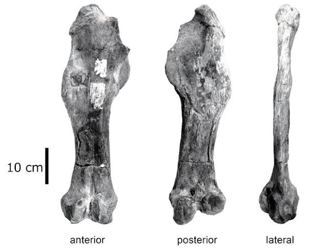 Forgotten fossil rewrites Japan's ancient Cenozoic age of mammals
