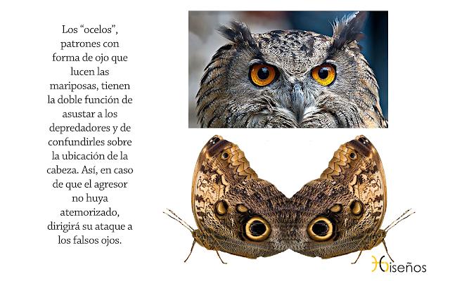 Buho_Ocelos_Mariposas