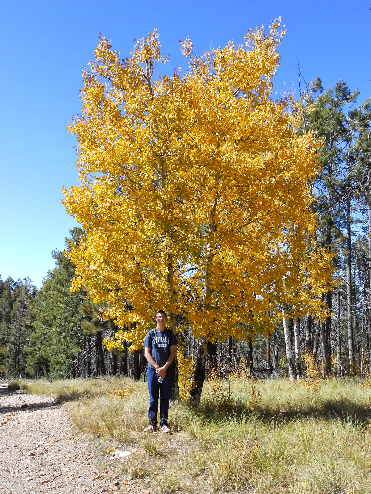 hiking on mount lemmon in the fall