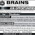 Brains Institute Peshawar Jobs