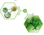 NovAge Ecollagen τεχνολογία τριπεπτιδίων και φυτικά βλαστοκύτταρα