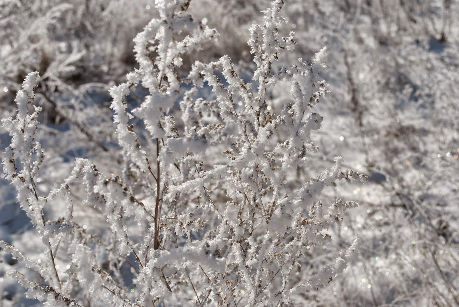 иней, снег, трава, лес