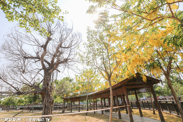 《台中.南屯》公93公園 江南風情的公園 阿勃勒盛開 滯洪池像座牧場