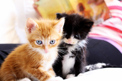 kittens, sopurrfect.com, cat foster