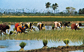 cultivation methods in india
