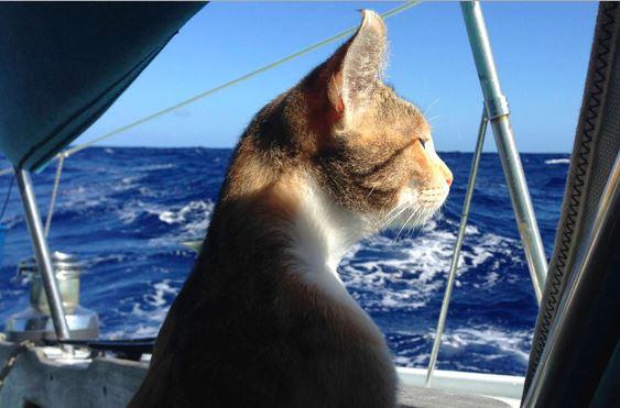 Kucing yang Berlayar Mengelilingi Dunia