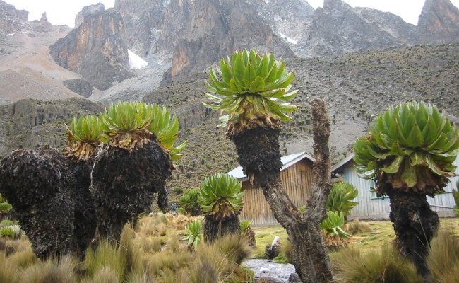 Xvlor Mount Kenya National Park is reserve to protect 5199 meters stratovolcano
