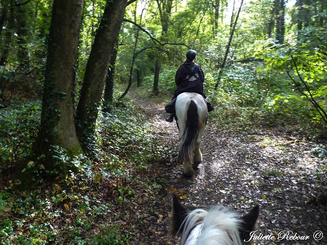 Randonnée à cheval en forêt, normandie