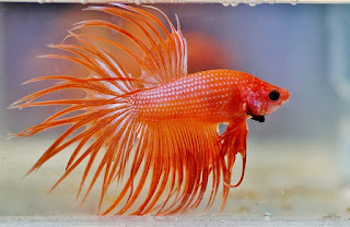 Best Tropical Fish for Beginners