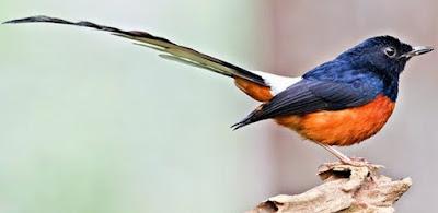 Manpaat Pemberian Vitamin Burung Anti Stres Dan Kisaran Harga Terbarunya Saat Ini Paling Lengkap