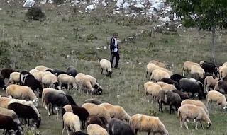 Σοκαριστική μαρτυρία κτηνοτρόφου στην Εύβοια: Ήρθα πρόσωπο με πρόσωπο με το Διάβολο