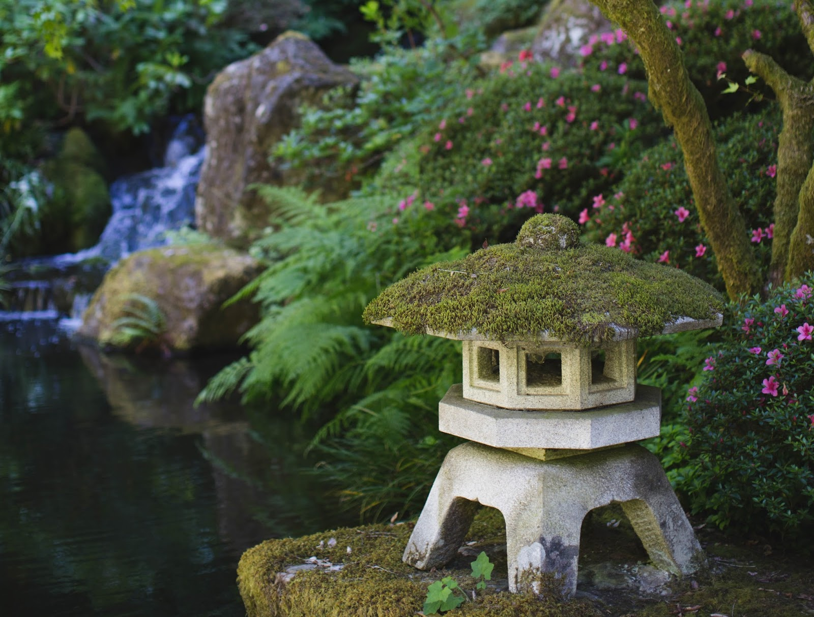 Lattes layers gardens and green spaces in portland - Portland japanese garden admission ...