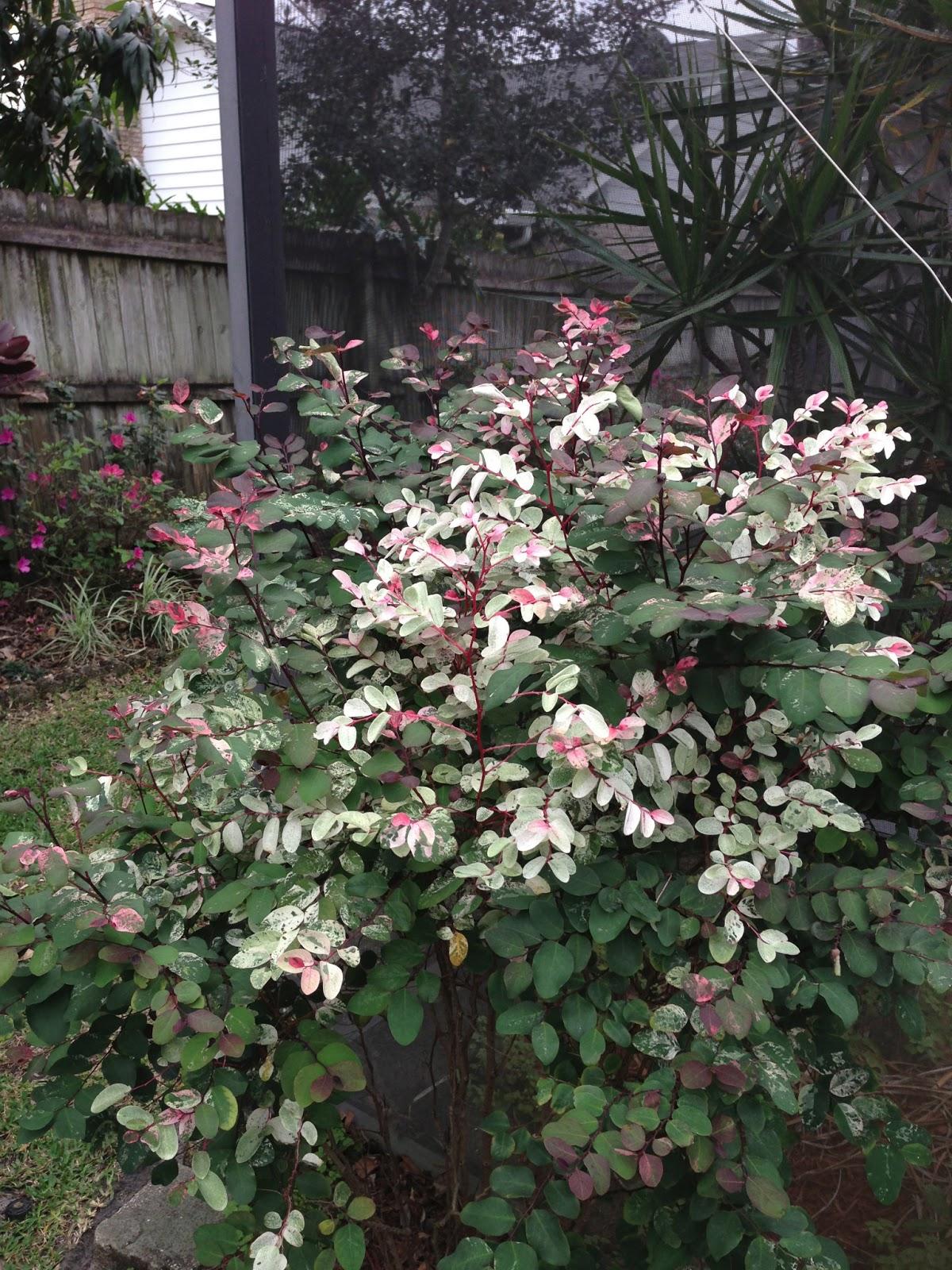 Garden Bush: Anita's Garden Corner