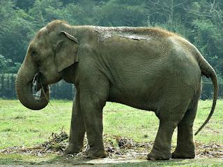 Elefante comendo no Parque Zoológico de Sapucaia