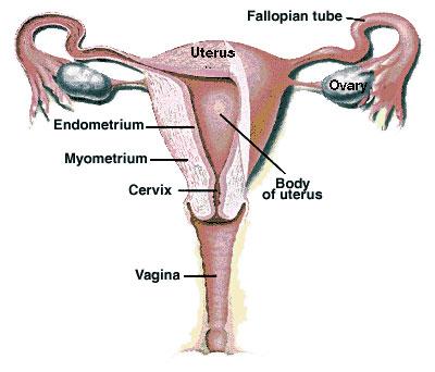 Kanker Pada Perempuan Penghambat Kehamilan yang perlu diwaspadai