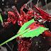 Gundam Base Tokyo Displays their May 2019 Exclusive GunPla