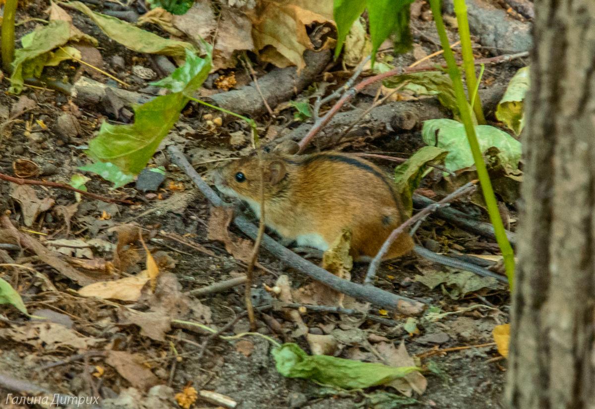 Мышь в Нескучном саду фото