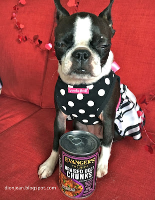 Sinead the Boston terrier with a can of dog food