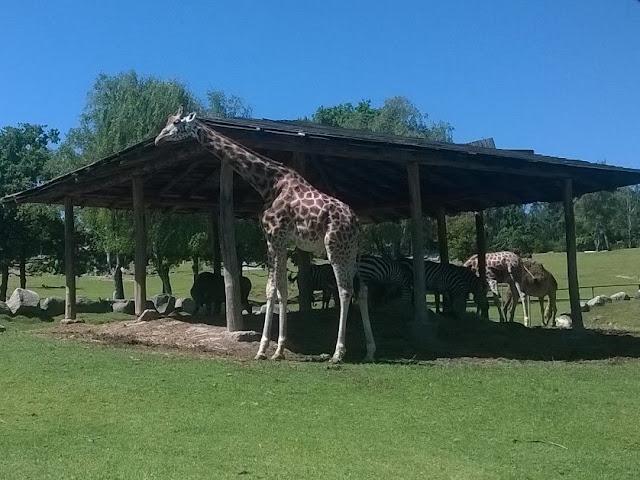 Giraffe e Zebre piemonte